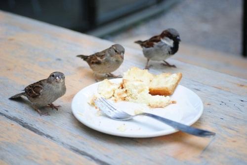 Spatzen-Bäckeranlage1